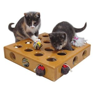 How to make an indoor cat s environment more for How to make a cat toy out of a box